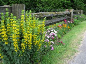 Spring-flower-perennials