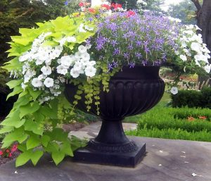 Use-a-big-flower-container